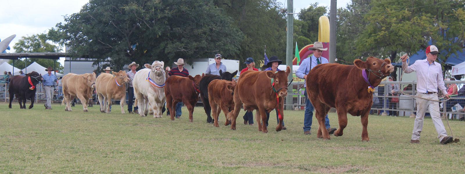 slider-cattleparade